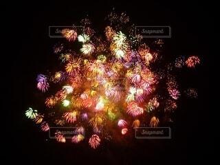 彩色千輪菊の写真・画像素材[4659996]