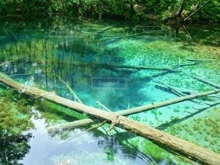 もう一つの青い池? 神の子池の写真・画像素材[4693069]