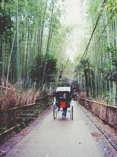 竹林をゆく人力車の写真・画像素材[4774271]