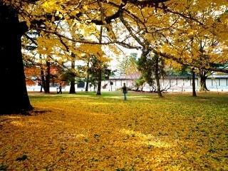 大きな銀杏の木の下での写真・画像素材[4817890]