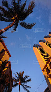ヤシの木と青空と月の写真・画像素材[4835072]