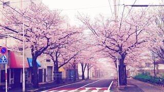街の通りの眺めの写真・画像素材[4535555]