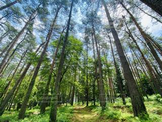 自然,空,森林,屋外,草,樹木,ジャングル,草木