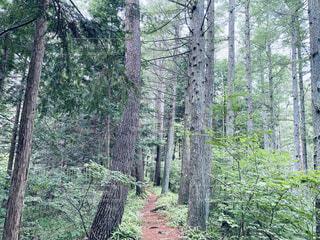 自然,森林,木,屋外,樹木,草木