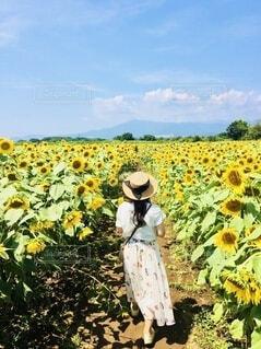 向日葵畑にての写真・画像素材[4657957]