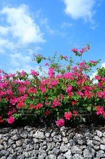真夏の沖縄にての写真・画像素材[4719053]