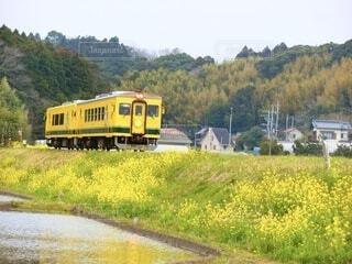 春色の列車の写真・画像素材[4776661]