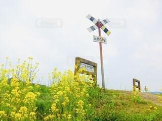 春色の踏切の写真・画像素材[4776660]