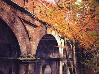 京都の秋の写真・画像素材[4789230]