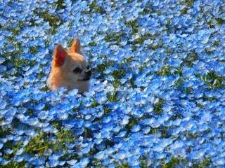 春のお散歩の写真・画像素材[4842329]