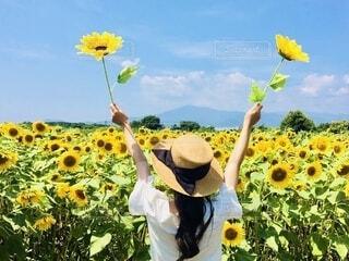 満開の向日葵畑での写真・画像素材[4859326]
