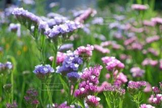 カラフルなお庭♡の写真・画像素材[4913720]