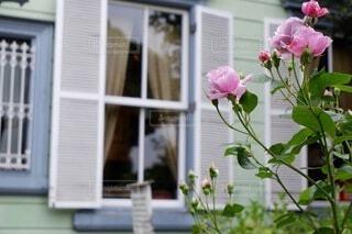 素敵なお庭の写真・画像素材[4931416]