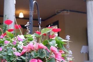 お花のある暮らしの写真・画像素材[4931413]