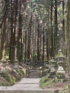 参道の森林の写真・画像素材[4529767]