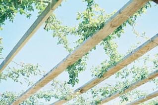 新緑と空の写真・画像素材[4526268]