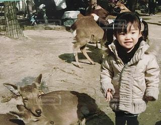 鹿と娘 懐かしい思い出の写真・画像素材[4537519]