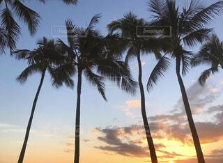 ハワイの写真・画像素材[4529057]