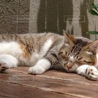 taking a napの写真・画像素材[4525844]