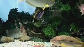 夏,魚,水族館,色とりどり,いっぱい,せつない,想像,大きい白い魚2匹,ケンカ?,相手にされない