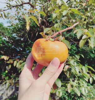 果物を持っている手の写真・画像素材[855580]