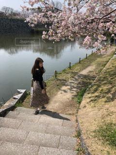 桜の下での写真・画像素材[1959423]