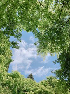 木々と空の写真・画像素材[3151455]