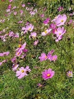 花,屋外,ピンク,草,草木
