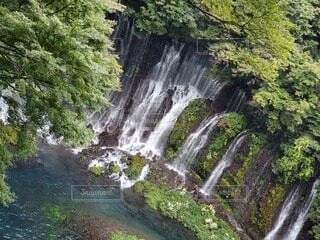 滝の写真・画像素材[4529508]
