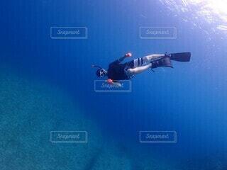海の中の写真・画像素材[4529566]