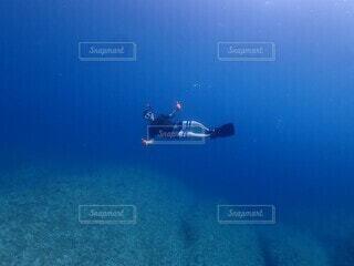 海の中の写真・画像素材[4529565]