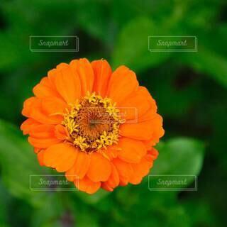 花のクローズアップの写真・画像素材[4537337]