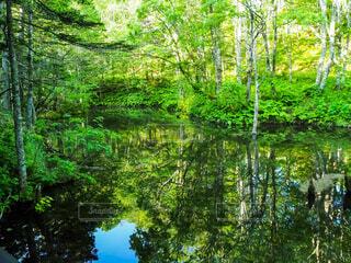 透き通った水面に写る木々の写真・画像素材[4558185]