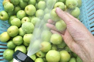 梅仕事 収穫した梅を洗う女性の写真・画像素材[4539218]
