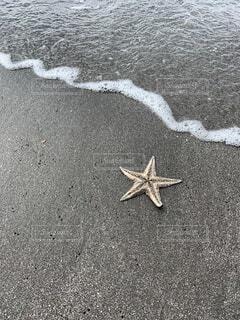 波打ち際のヒトデの写真・画像素材[4539901]