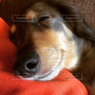 犬の写真・画像素材[494227]