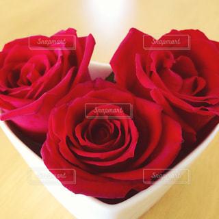 赤い薔薇の写真・画像素材[1371260]