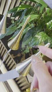 夏,野菜,風鈴,音色,人物,人,癒し,観葉植物,涼しげ,summer,草木,夏の象徴,チリンチリン,夏といえば,色んな風鈴
