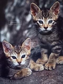 ノラ猫の生きる道の写真・画像素材[4550579]