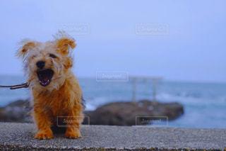 ビーチに座っている犬の写真・画像素材[985910]