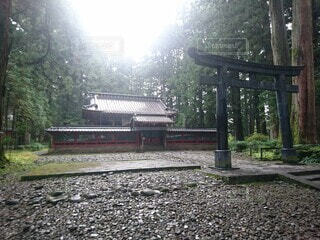 森の前のベンチの写真・画像素材[4550190]