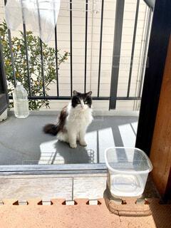 玄関先の猫の写真・画像素材[4569401]