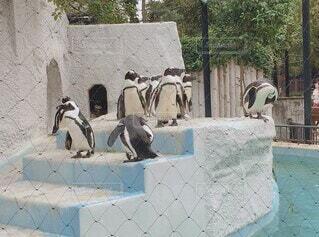 動物,鳥,屋内,屋外,階段,かわいい,水族館,ペンギン,樹木,可愛い,地面,動画,人慣れ,動く,ムービー