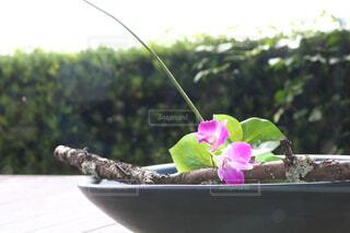縁側に生けてあるお花の写真・画像素材[4571486]