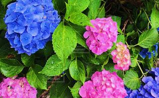 花のクローズアップの写真・画像素材[4558557]