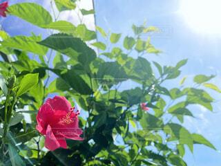 緑の葉のピンクの花の写真・画像素材[4561864]