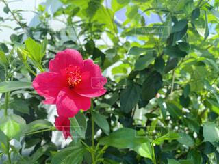 植物の上のピンクの花の写真・画像素材[4561866]