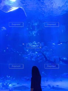 のとじま水族館の写真・画像素材[4558291]