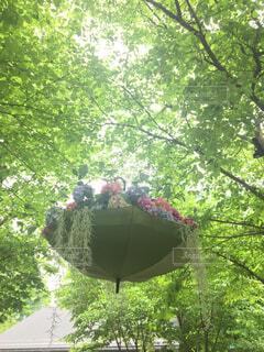 木の中にひっそりとある傘の写真・画像素材[4563865]
