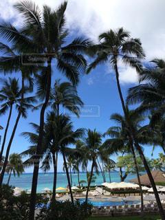どこも絵になるハワイの風景の写真・画像素材[4580211]